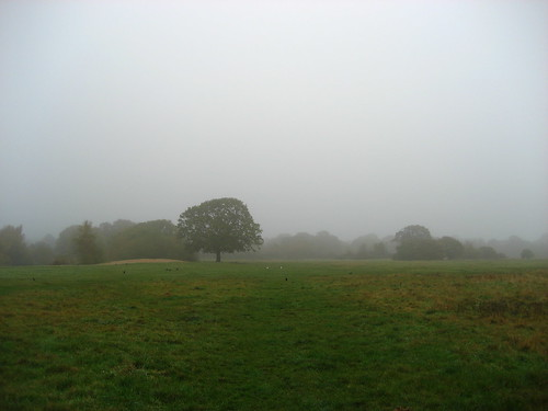 Misty morning on the edge of Epping Forest