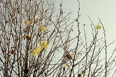 november sky (motocchio) Tags: november autumn sky ep2 2011