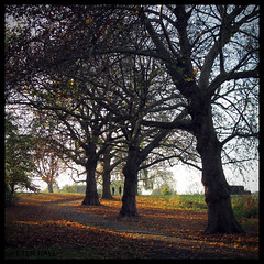 Autumn Ending (peterphotographic) Tags: park uk autumn england tree london grass square leaf branch britain path walk trunk walthamstow eastlondon leavalley riverlea springfieldpark canong12 img5074sqedwm