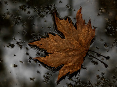 IMG_0345 (AlexandrosD) Tags: life autumn canon leaf still cloeup 550d 18135mm