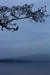 Loch Lomond (DMeadows) Tags: lake mountains tree water leaves silhouette scotland branch branches horizon shoreline bank hills shore loch lomond balloch lochlomond davidmeadows dmeadows yahoo:yourpictures=waterv2