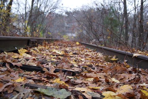 Leafy tracks