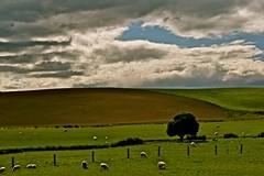 Brown Curve (Mark Tweedale) Tags: west pasture otago