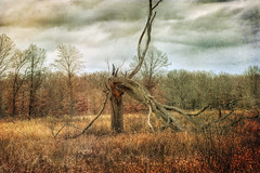 Cthulhu the Tree Stump (carpetfibers) Tags: autumn trees landscape cthulhu deadtrees naturepoetry autumnlandscapes