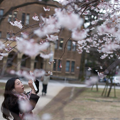 (hugo benichi) Tags: white mobile japan tokyo spring blossom sigma  cherryblossom sakura keitai hanami 50mmf14   a900 alpha900 sigma50mmf15
