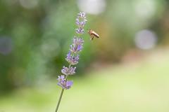 38°C - Summer's back! (Tony Emmett) Tags: france macro nature garden sony sigma alpha sigma105mmf28macro a700 sigma105mm sigma105mmf28exdgmacro sonyalpha sonyalpha700 minoltaamount