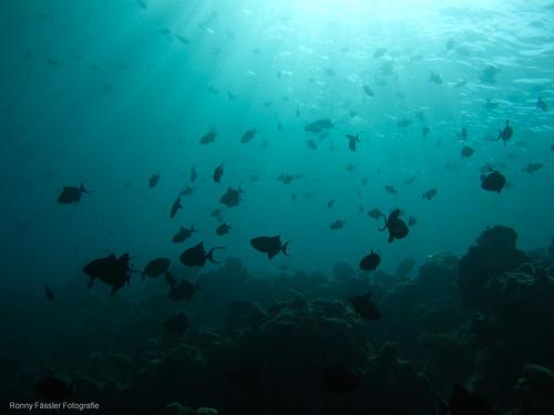 Malediven 2010 -2218