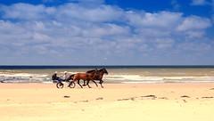 Drrrrraf! (hetty m) Tags: horses beach noordzee northsea horseriding sulky julianadorp