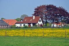 Wezep (JaapCom) Tags: flowers landscape van lente jaap buurt wezep werven