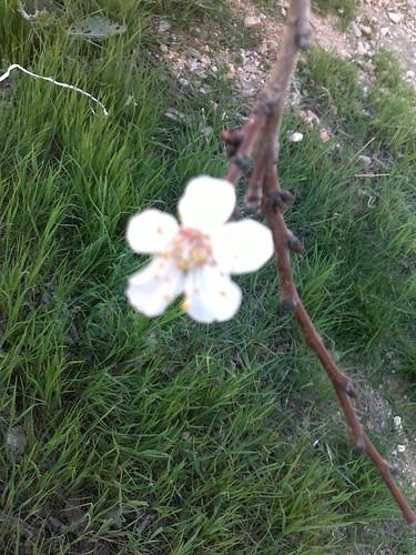 الاردن في الربيع صور 5910901709_4b2621a950.jpg