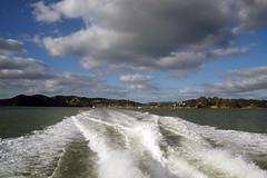 DSC01610 (Jessie K Smith) Tags: ocean trip newzealand vacation sky holiday nature beautiful landscape islands bay scenery tour dolphin dolphins nz maori bayofislands kiwi pahia