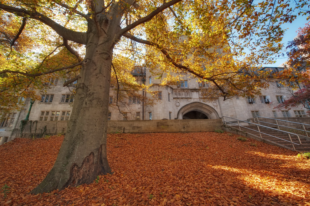 The Spreading Boughs of Autumn, Indiana University, Bloomington