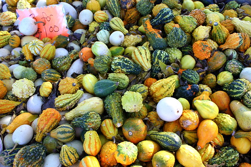 Walden Farm: Ornamental Gourds & Pumpkins by SeeMidTN.com (aka Brent)