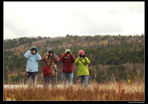 Bird-watching in Algonquin