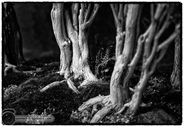 Bonzai Show at NC Arboretum 100811 © Michael Klayman-003