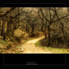 Despus de la curva (Julio_Castro) Tags: ruta nikon arboles camino campo montaa sendero senda ramas nikond200 oltusfotos