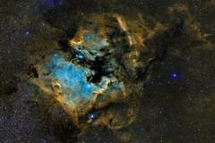 NGC 7000 - North America Nebula in HST-Palette (Urlaubsknipser) Tags: sii oiii halpha ngc7000 astrofotografie nordamerikanebel astrotrac Astrometrydotnet:status=solved sternbildschwan schmalband Astrometrydotnet:version=14400 hstpalette Astrometrydotnet:id=alpha20111096518311