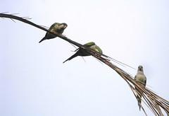 three little birds (dmixo6) Tags: spain 2011 dugg dmixo6
