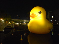 Rubber Duck 2 2 (MRSY) Tags: water yellow japan night river geotagged duck  osaka nakanoshima oversize        geo:lat=34692047123941315 geo:lon=13550836946815252