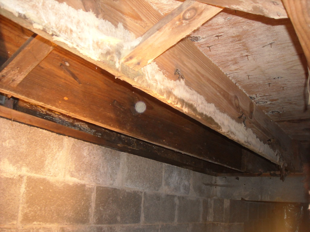 white mold on joist before