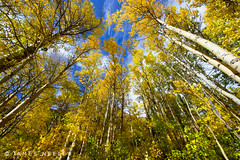 Autumn Perspective (James Neeley) Tags: california autumn fall landscape f12 easternsierra lundylake jamesneeley