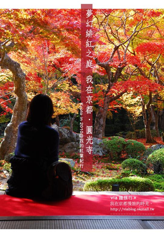 【京都賞楓】via的京都紅葉紀行*京都圓光寺~極致紅葉庭園之美
