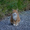 a stray cat in Fudoh-Pond (2/3) (macpapaja) Tags: wild nature cat canon square exf1