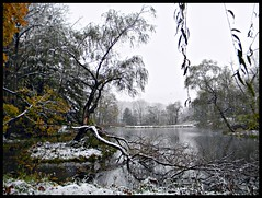 first snowfall (kjimbo (Wishes for Peace)) Tags: northpark 100commentgroup doubleniceshot tripleniceshot mygearandme mygearandmepremium aboveandbeyondlevel4 aboveandbeyondlevel1 flickrstruereflection1 soulselection aboveandbeyondlevel2 aboveandbeyondlevel3 rememberthatmomentlevel1 rememberthatmomentlevel2
