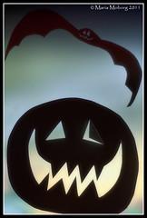 Halloween Bat Pumpkin (mmoborg) Tags: halloween face paper pumpkin eyes sweden cut bat sverige papercut pumpa papper 2011 ansikte ögon fladdermus mmoborg mariamoborg utskuren