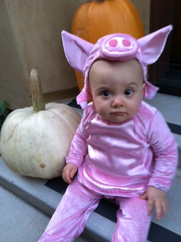 Babe the Pig