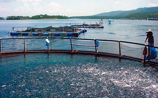 Floating cages, Philippines. Photo by Wilfredo Yap, 2006