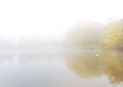 Misty Pond (Philipp Klinger Photography) Tags: park autumn trees white mist reflection tree bird fall nature water animal yellow misty fog reflections germany landscape deutschland duck leaf am pond europe day hessen frankfurt main goose foliage leafs autumnal frankfurtammain stadtpark hesse hchst