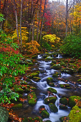 Roaring Fork River in Great Smoky Mountain National Park (photogg19) Tags: creek nikon fallcolor tennessee autumnleaves gatlinburg roaringforkmotornaturetrail greatsmokymountainnationalpark riverstream roaringforkriver d7000