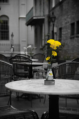 Yellow Flowers at New Orleans Open Cafe[Explored] (Yohsuke_NIKON_Japan) Tags: blackandwhite usa flower yellow america la nikon louisiana neworleans partialcolor zoomlens  selectivecolor 18200mm explored  d300s