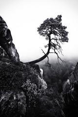 the abyss (Dennis_F) Tags: morning autumn white mist black tree fall nature colors fog zeiss germany landscape deutschland schweiz switzerland colorful nebel sony herbst natur wide sachsen fullframe dslr landschaft ultra bunt ssm saxon farben abyss schlucht morgens schsische schsischeschweiz 1635 uwa weitwinkel weis ultrawideangle uww a850 163528 sonyalpha sonydslr vollformat scwarz zeiss1635 sal1635z cz1635 sony1635 dslra850 sonya850 sonyalpha850 alpha850 sonycz1635