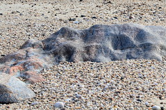 Gneiss (sandy richard) Tags: longisland beaches wildwood wildwoodstatepark sandyrichard sandrarichard