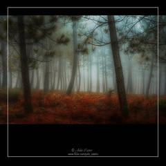 En el bosque encantado (Julio_Castro) Tags: autumn trees brown mountain forest hojas nikon arboles nikond70s bosque otoo montaa niebla castao avila eltiemblo colorphotoaward oltusfotos