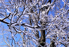 fractalicious (dmixo6) Tags: trees winter sky snow first muskoka 705 dugg dmixo6