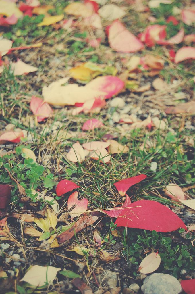 leaves_in back_5