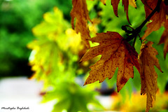 خزان (Moustapha B) Tags: autumn cold tree green yellow digital canon turkey eos leaf colorful alone 7d 18200 ankara سرما درخت سبز رنگ زرد پاییز مصطفي شرقی خاطره 2011 آنکارا moustapha ترکیه برگ رنگارنگ