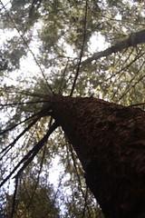 IMG_0657 (bvohra) Tags: sf sanfrancisco california ca northerncalifornia sfo highway1 pacificocean norcal moragaca pointreyesnationalseashore oaklandbaybridge saintmaryscollegeofcalifornia hikingincalifornia sfoterminal2