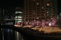 Meguro-River Illumination 2011 (Osaki, Tokyo, Japan) (t-mizo) Tags: light japan night tokyo illumination sigma   gotanda osaki foveon  meguroriver     dp2   shinagawaku