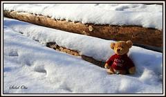 My little Teddy - Don't Panic (57) (Sidsel Oba) Tags: bear red brown cute norway fun toy toys norge photo funny colours foto teddy little fantasy teddybear st rd playful brun bjrn moro tnsberg bamse dontpanic leker leke farger liten gy morsom fantasi sidseloba