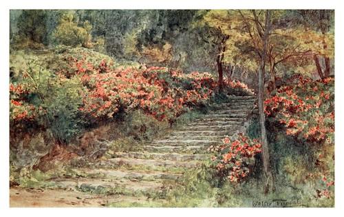 003-Azaleas en una antigua escalera-Japanese gardens 1912-Walter Tyndale