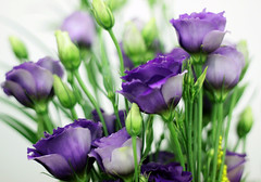 June Twenty-Ninth. (redaleka) Tags: flowers blue green nature petals purple fresh buds bouquet delicate junetwentyninth threehundredsixty
