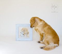 Birthday Gifts: A Special Watercolor from Flickr Friend Franco Vannini (VeryViVi) Tags: dog goldenretriever watercolor painting studio artwork friendship maddy gift doggy 2ndbirthday missvivigold veryvivi francovannini