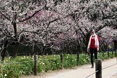 _ROW8979 (Alex Rowan) Tags: people plants flower alex japan asia rowan okayama plumblossom korakuen  okayamacity  alexrowanphotography