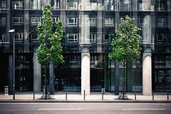 city greens (Dennis_F) Tags: street city windows house building tree green architecture zeiss germany deutschland mirror licht am frankfurt sony main wide fullframe dslr ultra ssm ffm 1635 uwa weitwinkel ultrawideangle uww strase a850 163528 sonyalpha sonydslr vollformat zeiss1635 sal1635z cz1635 sony1635 dslra850 sonya850 sonyalpha850 alpha850 sonycz1635