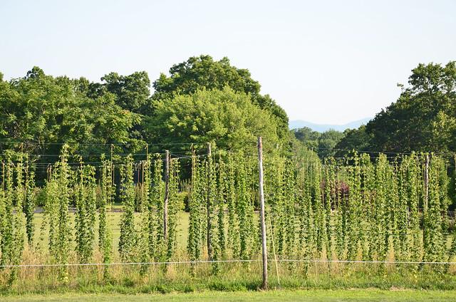 Hop Garden at Blue Mountain Brewery