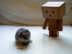 052-2 (mmrified) Tags: cute toy toys rodent robot dwarf vinyl kawaii hamster winterwhite hamsters sapphire oolong plastictoys yotsuba japanesetoys danbo toyrobot revoltech djungarian danboard